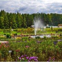 Аптекарский сад :: Vladimir Semenchukov