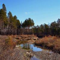 Лесными тропами :: Евгений Карский