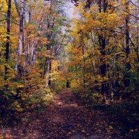 Осенние краски :: Вера