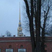Собор Петропавловской крепости этой зимой. (Санкт-Петербург) :: Светлана Калмыкова