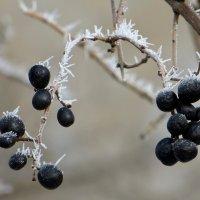 Прикосновение мороза :: Татьяна Смоляниченко