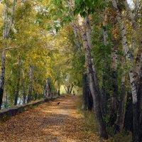 Прогулка в осень :: Екатерина Торганская