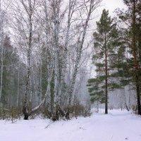 Снежный заряд :: Сергей Царёв