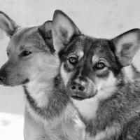 Дачные друзья. Рыжик и Акела... :: Александр Резуненко
