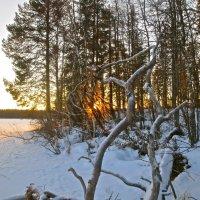 солнечный костёр в январе :: Елена
