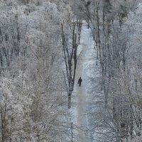 Зимняя тропа :: Наталья Тимошенко