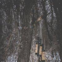 портвейн в лесу :: Алина Гриб