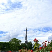 Цветы для парижанки :: Ольга