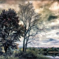 Осенние метаморфозы :: Ирина Falcone