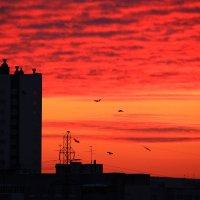 Про февральский вечер, небо и птиц :: Татьяна Ломтева