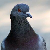 Птица мира :: Алекс Исаенко