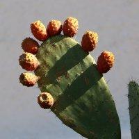 в Израиле весенний праздник , Новый Год деревьев - Ту би-Шват и отмечается посадкой деревьев :: vasya-starik Старик