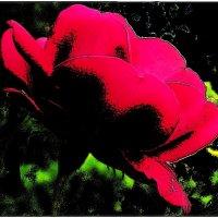 Роза :: Нина Корешкова