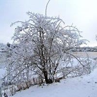 Зима :: veera (veerra)