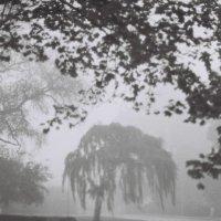 Туман :: Игорь Пилатович