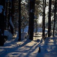 Лесной кошмар :: Дракон Хаку
