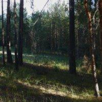 тени в лесу :: павел бритшев