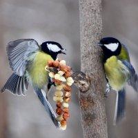 Птичьи разборки :: Ната Волга