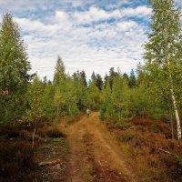 Лесная дорога... :: Sergey Gordoff