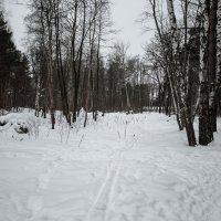 Прогулка в лесу :: Николай Холопов