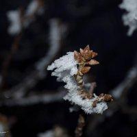 Зима на Кубани :: Александр Светлый