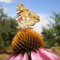 Бабочка :: Татьяна Пальчикова