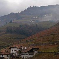 Виноградная страна :: Alexander Andronik