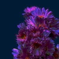 Хризантемы по фото Наталья Беглова :: Владимир Хатмулин