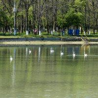 Городское водохранилище :: Игорь Сикорский