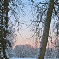 вечереет в зимнем лесу :: Елена