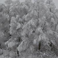 Зима вяжет снежные кружева. :: Tatiana Lesnykh Лесных