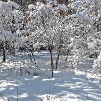 Ташкент в феврале :: Светлана