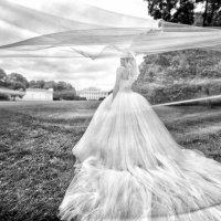 Черно-белое. Невеста и пышное платье :: Оля Ветрова