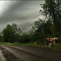 """...""""и кто этих городских в такую погоду гонит?.."""" :: Владимир Михайлович Дадочкин"""