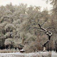 В заснеженном парке... :: Sergey Gordoff