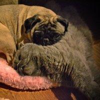 ... живут как кошка с собакой...))))) :: Victor