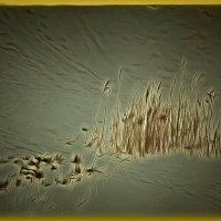 Молчанье старых камышей.... :: Tatiana Markova