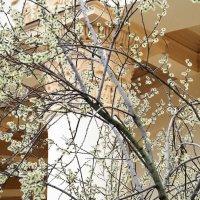 весна всё ближе или у природы свои законы :: Олег Лукьянов