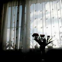 За окном плывут облака... :: Жанна Литуева