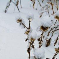 Под снежным одеялом 2 :: Мария Букина