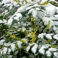 """Как сообщил метеоцентр-""""слабый ливневый снег"""" ! :: СветЛана D"""