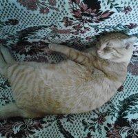 Стёпка сладко спит :: татьяна