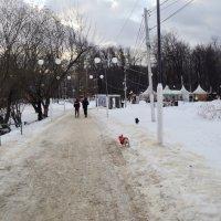 Наташинский парк в феврале 2017 года. :: Ольга Кривых