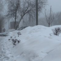 Серая вуаль тумана :: Татьяна Смоляниченко