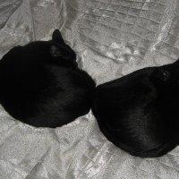 Два кошачьих калачика. :: Татьяна