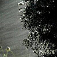 Метель в Ростовской области :: Юрий Гайворонский
