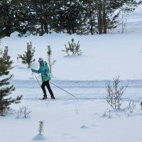 На лыжне :: Олег Афанасьевич Сергеев