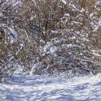 Прогулка в январе :: Игорь Сикорский