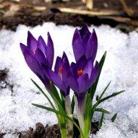 Весна идёт... :: Алексей Цветков