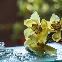 орхидея :: татьяна